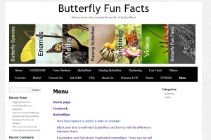 butterfly-fun-facts