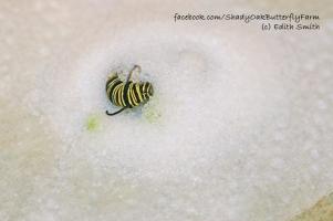 drowned-6-caterpillar-15-8-1.6