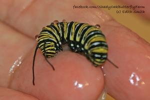 drowned-8-caterpillar-15-8-1.6