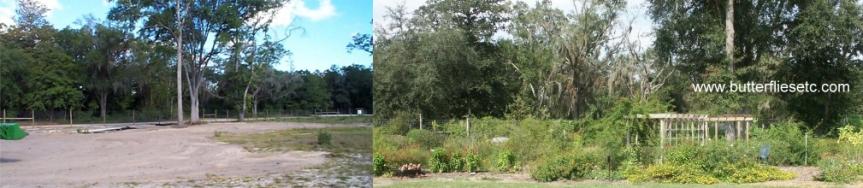 garden-farm-before-after-6