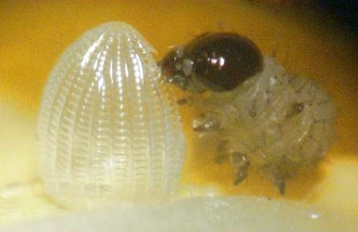 monarch egg hatched