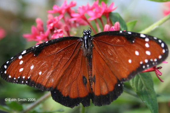 Sexually transmitted infections images of butterflies