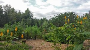 A private butterfly garden with dozens of species of host plants as well as dozens of species of nectar plants