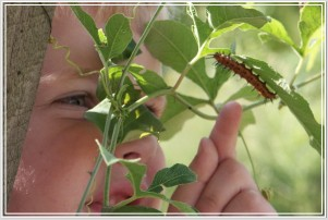 Jonathan discovers a Gulf Fritillary caterpillar in the garden