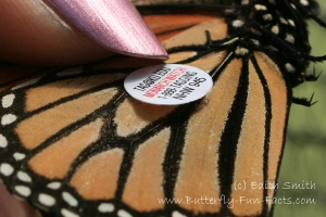 The tag must be adhered firmly or it will fall off, leaving a patch of scaleless wing