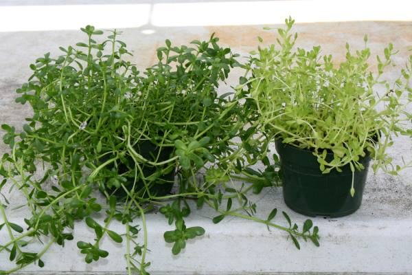 Why fertilize plants?